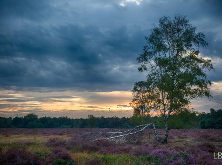 Flow : Slabroek Heather Fields - The Netherlands