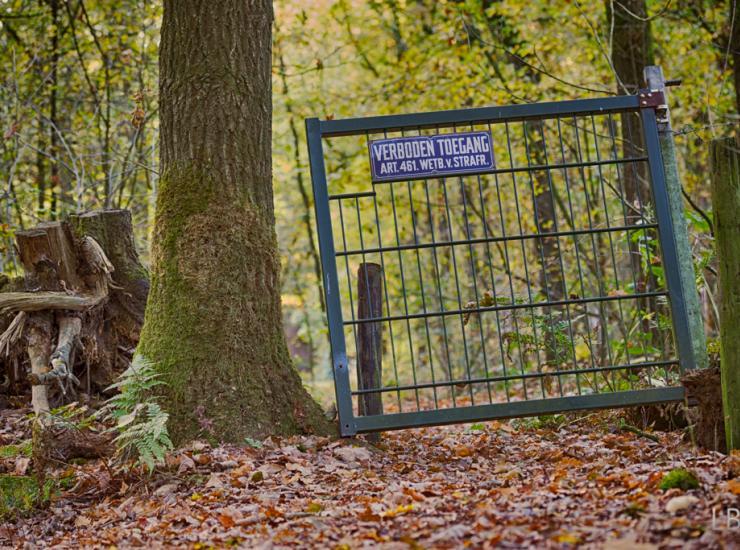 Flow : Gate in autumn forest